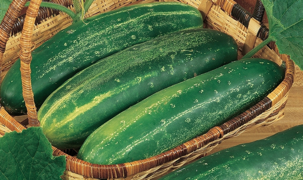 Cucumber 'Straight Eight'; 'Heirloom Vegetable Garden' (Component)