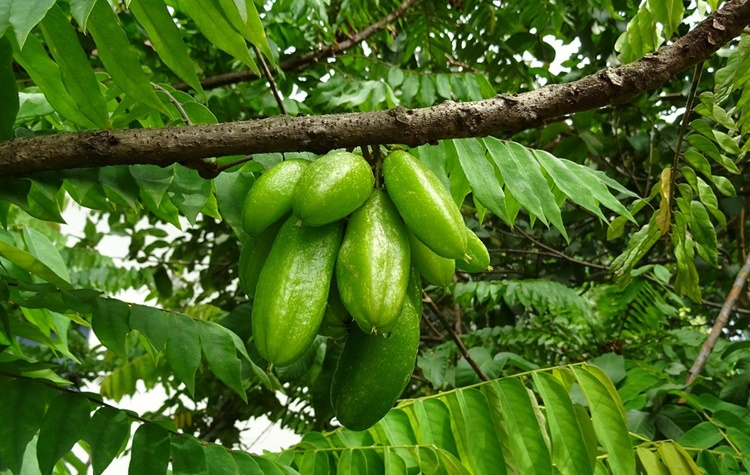bilimbi beneficios