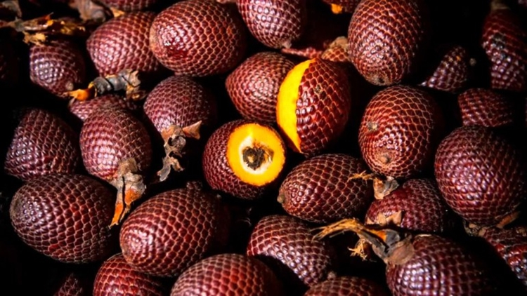 buriti beneficios